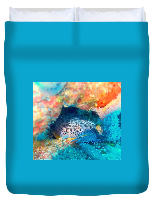 Duvet Cover featuring the photograph Goatfish by Todd Hummel