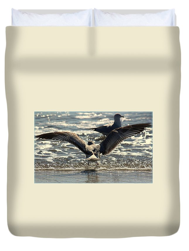Seagull Duvet Cover featuring the photograph Going For A Swim by Rosanne Jordan