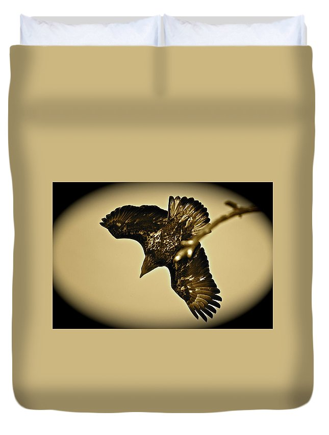 Bird Duvet Cover featuring the photograph Going Hunting by Diana Hatcher
