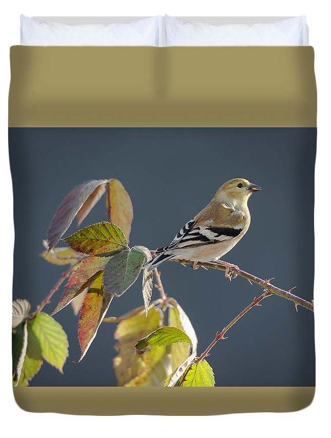 Birds Duvet Cover featuring the photograph Gold Finch by Larry Pacey