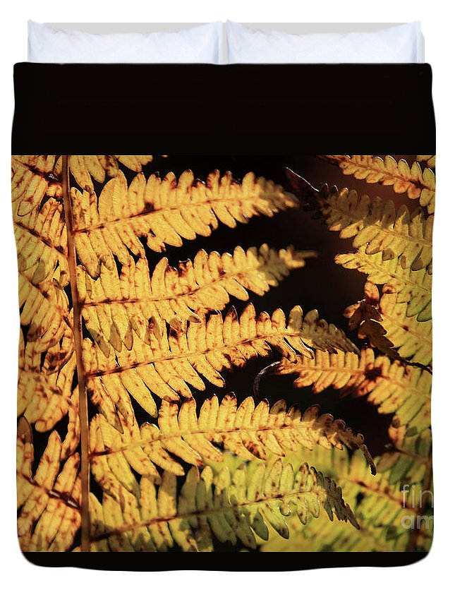 Golden Bracken Leaves Autumn Duvet Cover featuring the photograph Golden Bracken by Julia Gavin