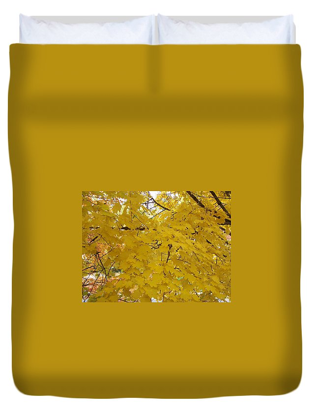 Fall Autum Trees Maple Yellow Duvet Cover featuring the photograph Golden Canopy by Karin Dawn Kelshall- Best