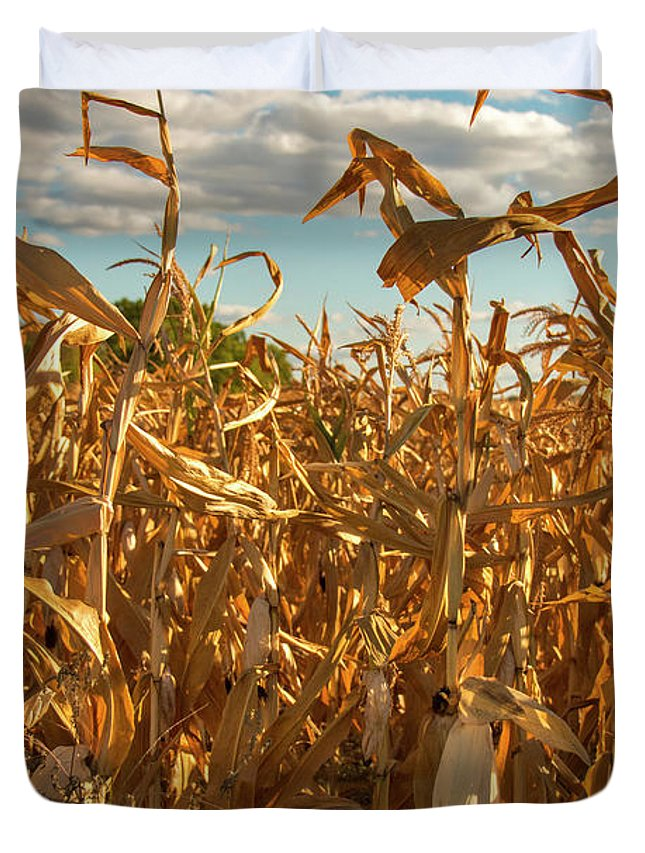 Golden Duvet Cover featuring the photograph Golden Crop by Brian Kenney