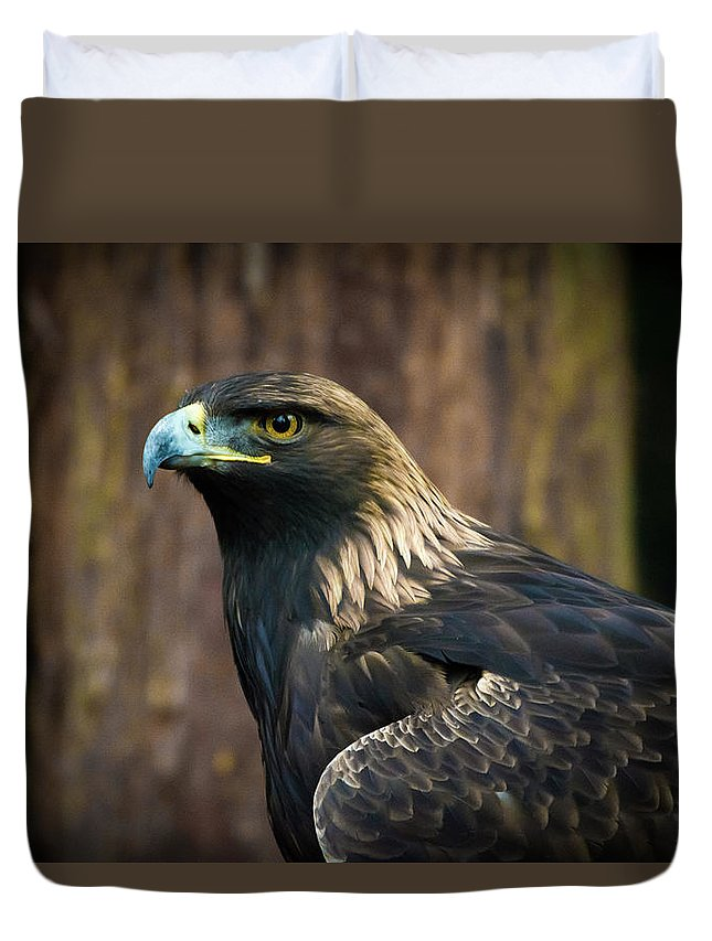 Eagle Duvet Cover featuring the photograph Golden Eagle 5 by Jason Brooks