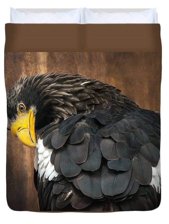 Eagle Duvet Cover featuring the photograph Golden Eagle Cleans Its Feathers by Olga Akulinina