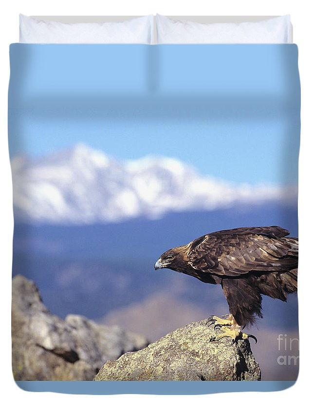 Animal Art Duvet Cover featuring the photograph Golden Eagle by John Hyde - Printscapes