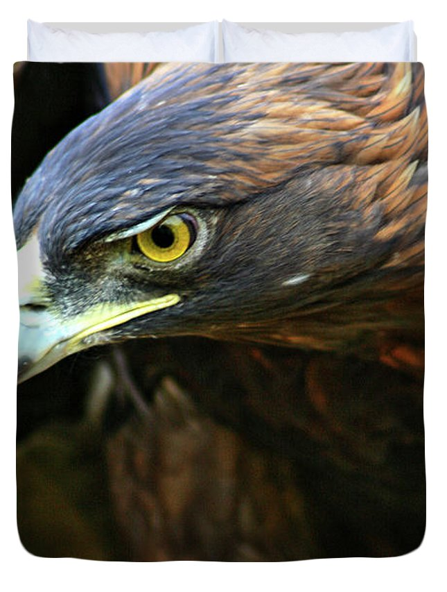 Golden Eagle Duvet Cover featuring the photograph Golden Eye by Scott Mahon