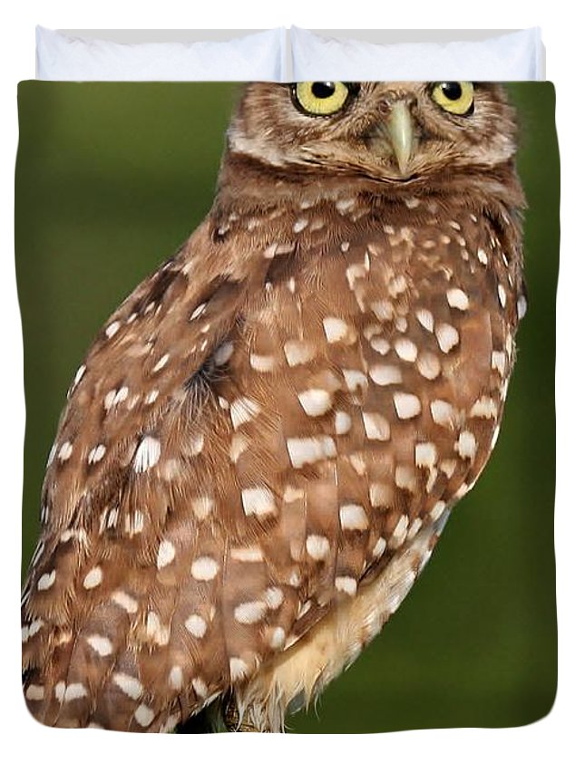 Owl Duvet Cover featuring the photograph Golden Eyes by Sabrina L Ryan