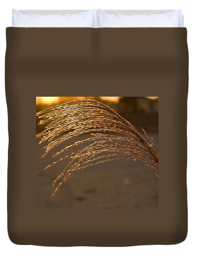 Grass Duvet Cover featuring the photograph Golden Grass by Douglas Barnett