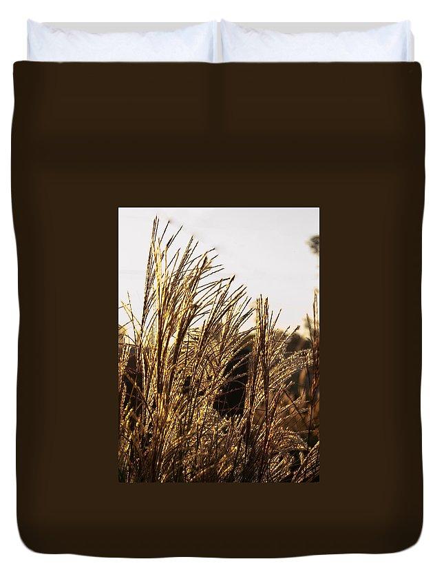 Golden Duvet Cover featuring the photograph Golden Grass Flowers by Douglas Barnett
