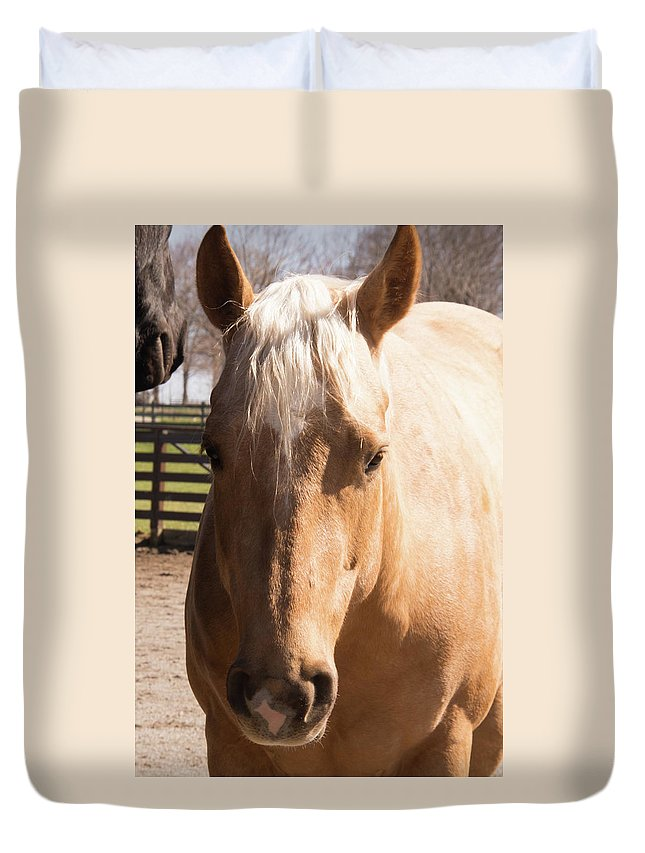Horse Duvet Cover featuring the photograph Golden Horse by Diane Schuler