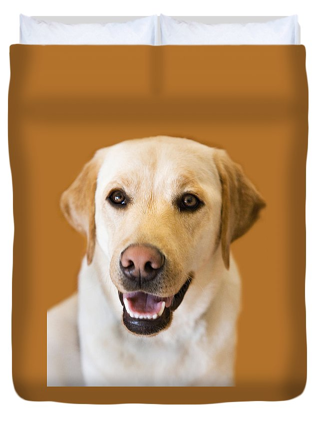 Lab Duvet Cover featuring the photograph Golden Lab by Marilyn Hunt