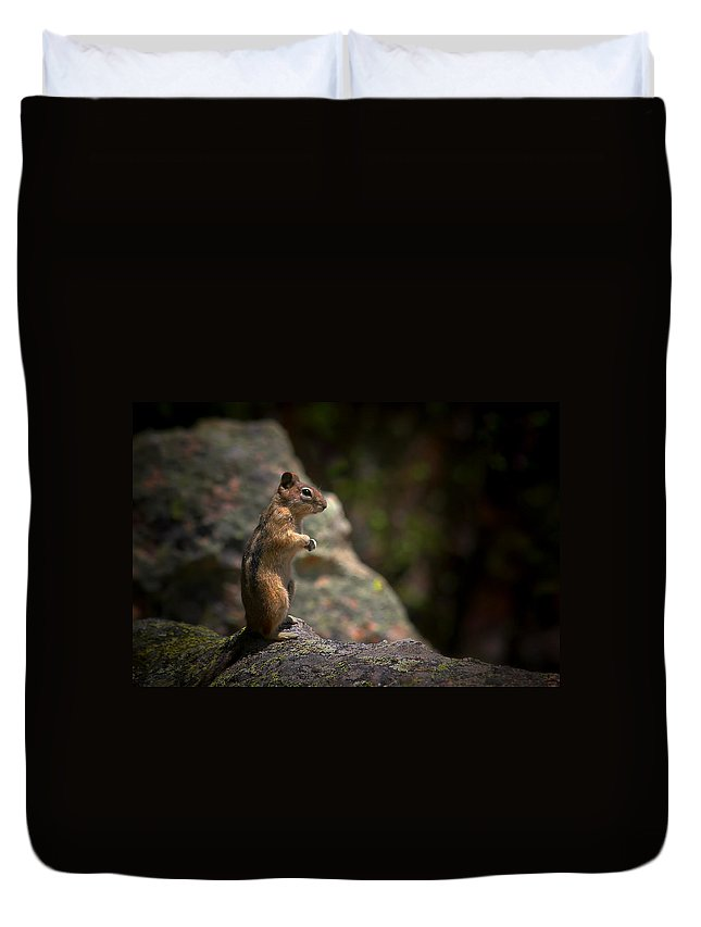 Nature Duvet Cover featuring the photograph Golden Mantled Ground Squirrel Rocky Mountains Colorado by Christine Till