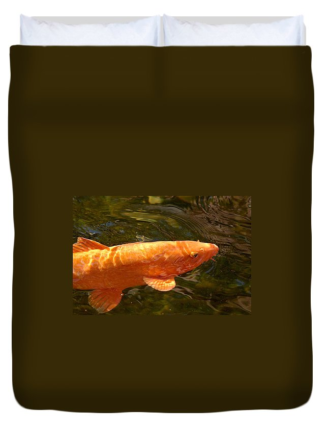 Loro Park Duvet Cover featuring the photograph Golden One by Jouko Lehto