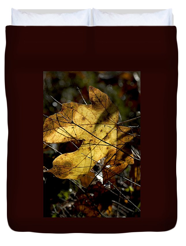 Leaf Duvet Cover featuring the photograph Golden by Sara Stevenson