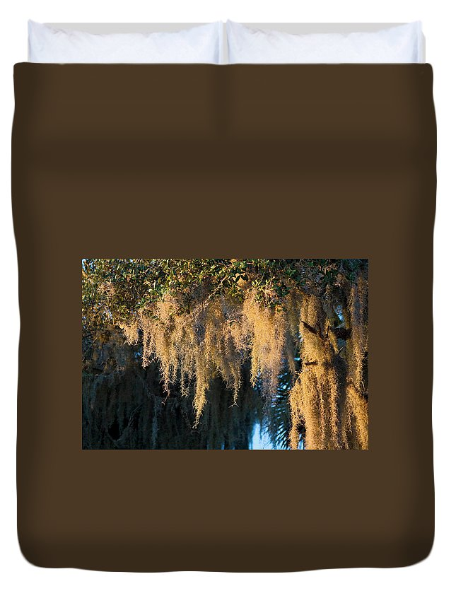 Spanish Moss Hanging Duvet Cover featuring the photograph Golden Spanish Moss by Sally Weigand