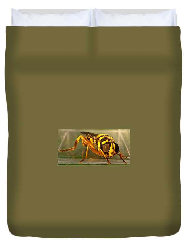 Syrphid Duvet Cover featuring the photograph Golden Syrphid by Douglas Barnett