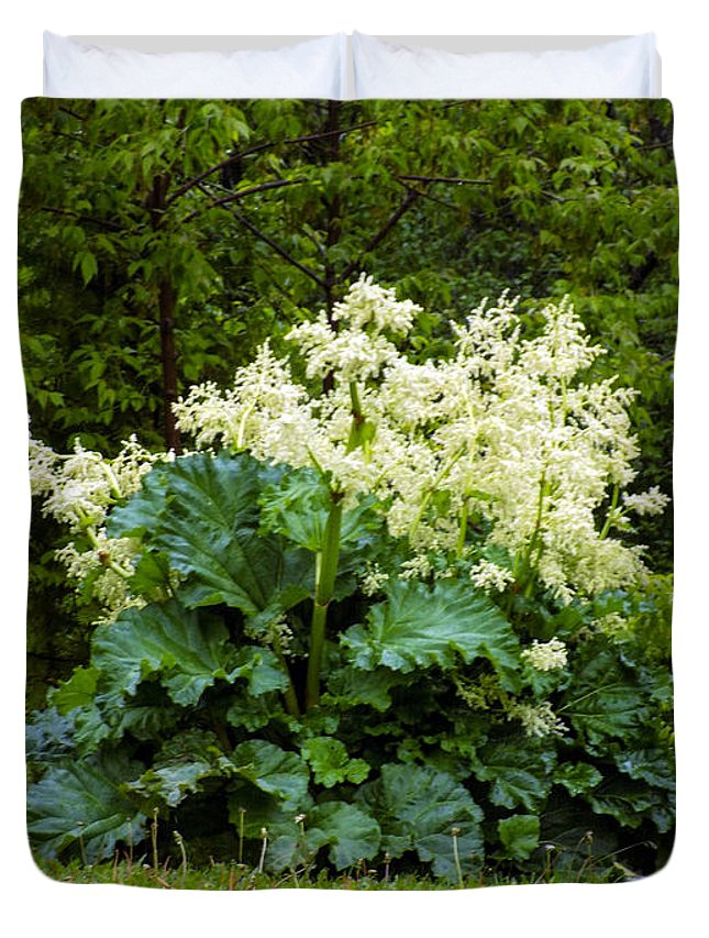 Rhubarb Duvet Cover featuring the photograph Gone To Flower by William Tasker