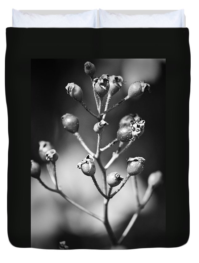 Fall Duvet Cover featuring the photograph Gone To Seed Rose Hips by Teresa Mucha