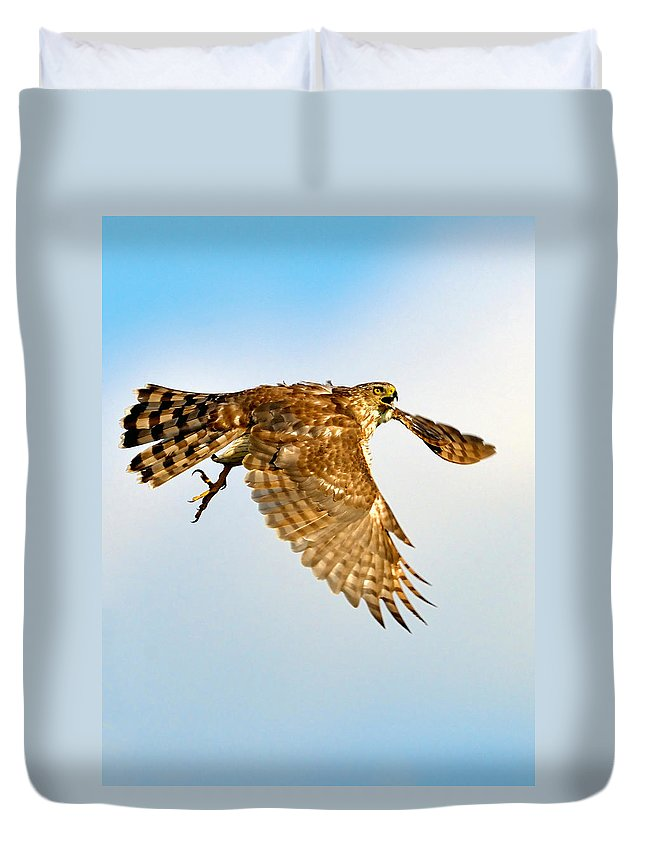 Hawk Duvet Cover featuring the photograph Good Hawk Hunting by William Jobes