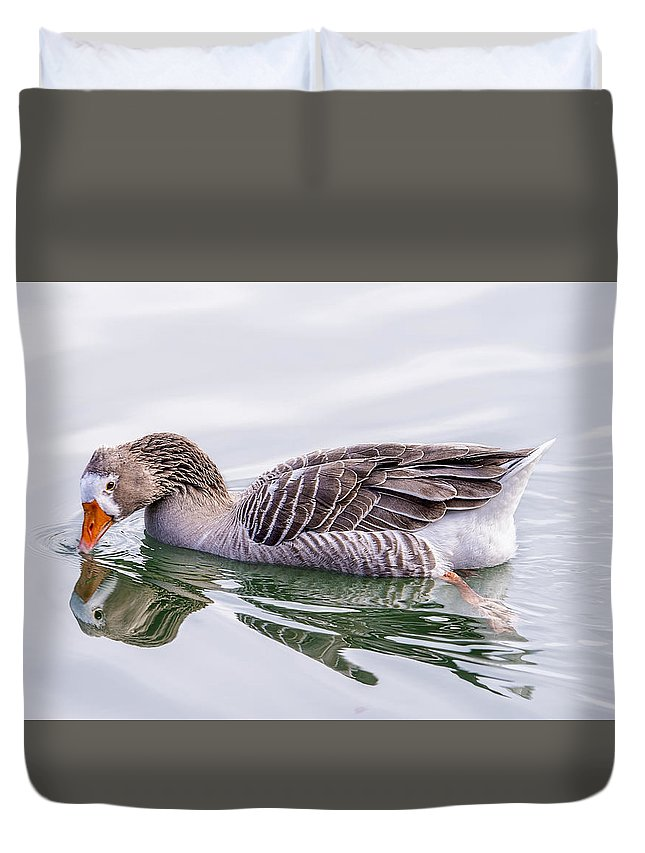 Animal Duvet Cover featuring the photograph Goose Swimming by Nina Lin