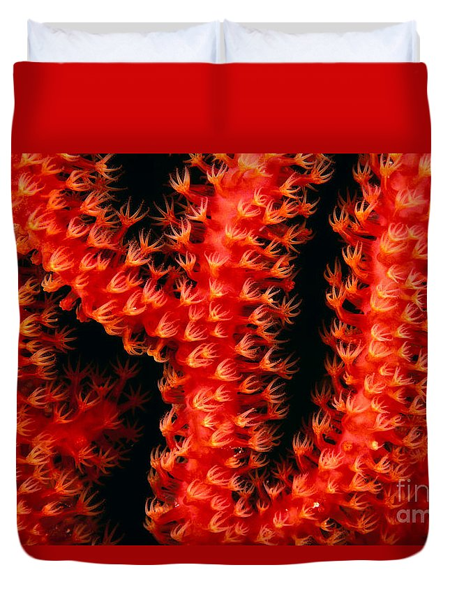 Branch Duvet Cover featuring the photograph Gorgonian Coral by Dave Fleetham - Printscapes