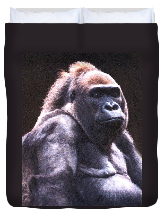 Gorilla Duvet Cover featuring the photograph Gorilla by Steve Karol