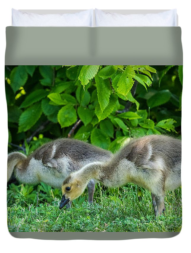 Geese Duvet Cover featuring the photograph Goslings by Paul Freidlund