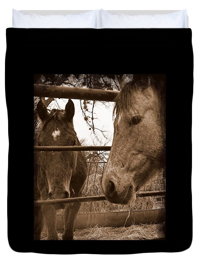 Horses Duvet Cover featuring the photograph Gossip At The Fence by Karen Musick