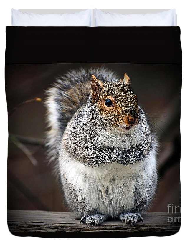 Squirrel Duvet Cover featuring the photograph Got Doughnuts by Lois Bryan