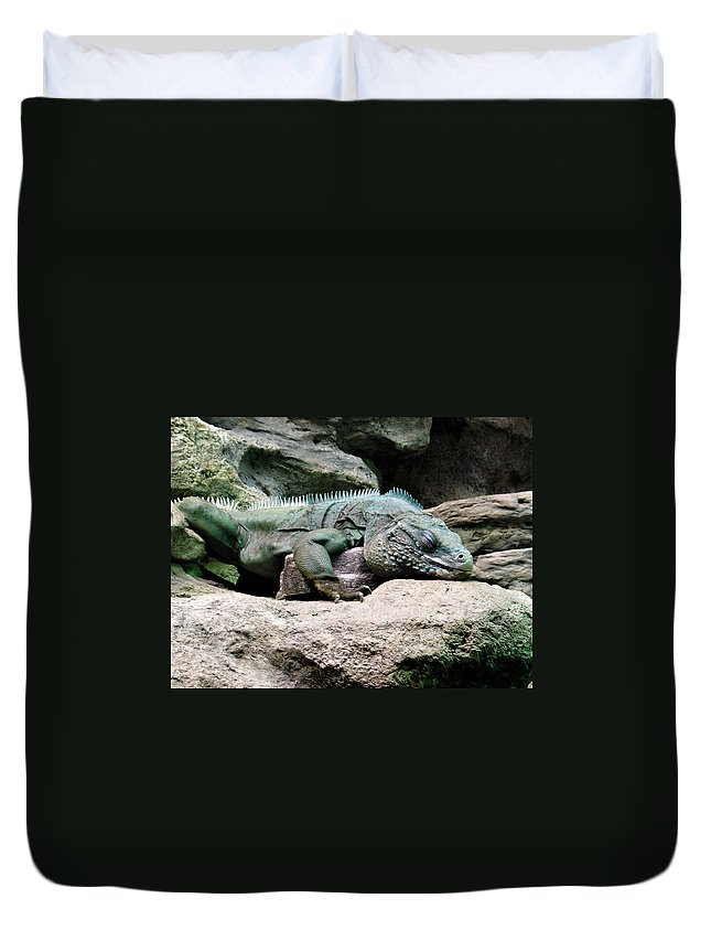 Lizard Duvet Cover featuring the photograph Grand Cayman Blue Iguana by Angelina Tamez