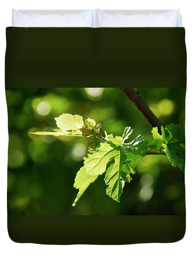 Wild Duvet Cover featuring the photograph Grape Leaves In Spring by Francesa Miller