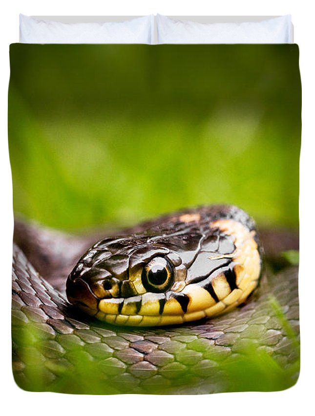 Grass Snake Photographs Duvet Covers
