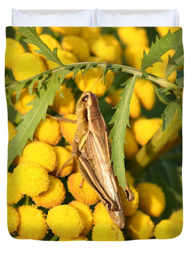 Bug Grasshopper Plants Flowers Nature Yellow Wild Life Green Weed Duvet Cover featuring the photograph Grasshopper by Andrea Lawrence