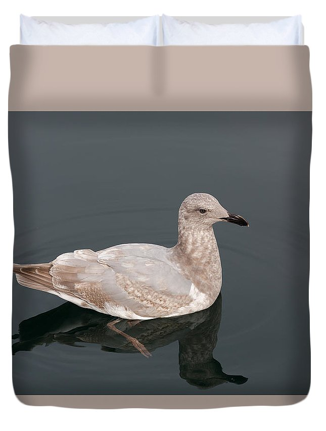 Seagull Duvet Cover featuring the photograph Gray Gull Reflection by John Daly