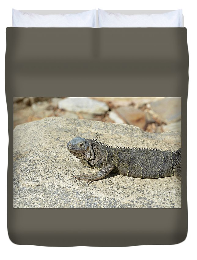Iguana Duvet Cover featuring the photograph Gray Iguana Sunning And Resting On A Large Rock by DejaVu Designs