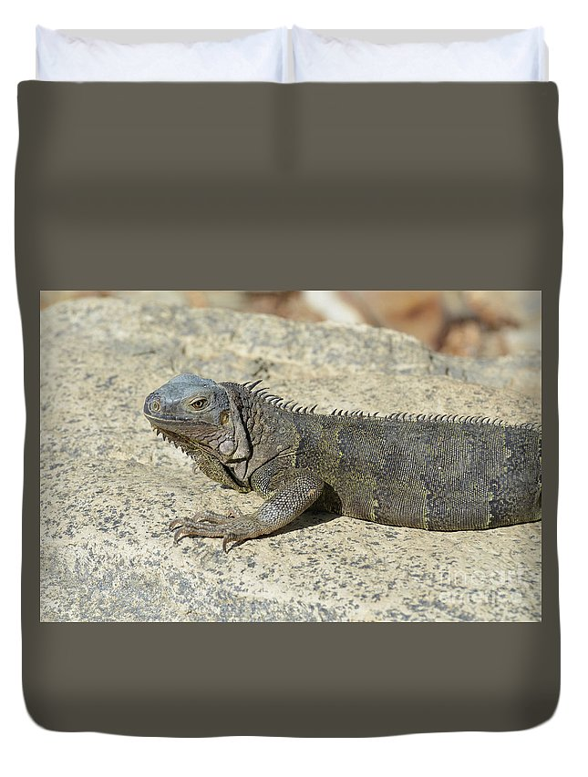Iguana Duvet Cover featuring the photograph Gray Iguana With Long Talons Sitting On A Rock by DejaVu Designs
