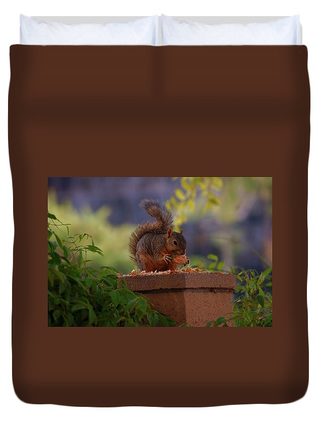 Rmb2010072600031 Duvet Cover featuring the photograph Munching Squirrel by Robert Braley