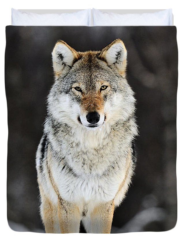 Timber Wolves Duvet Covers
