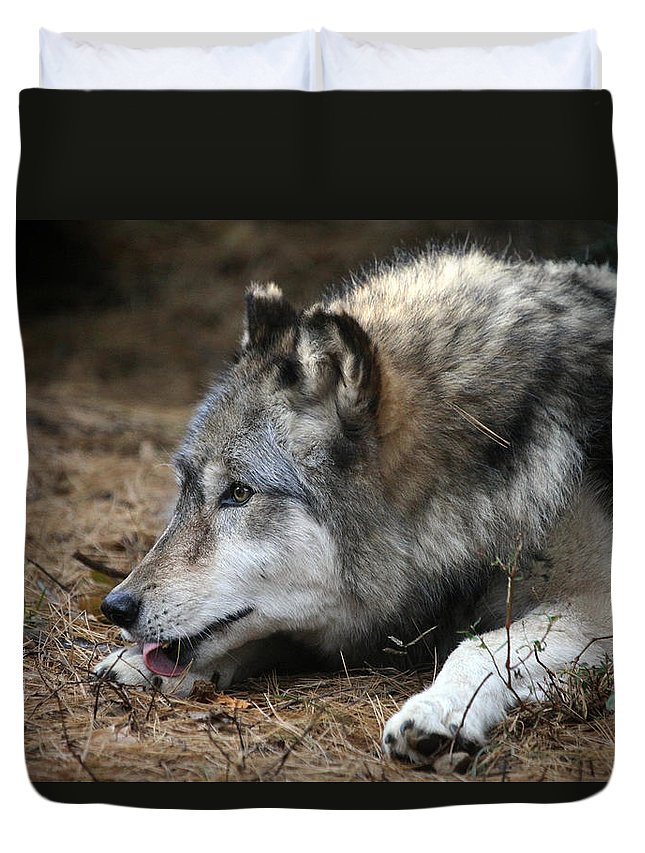 Wolf Duvet Cover featuring the photograph Gray Wolf by Karol Livote
