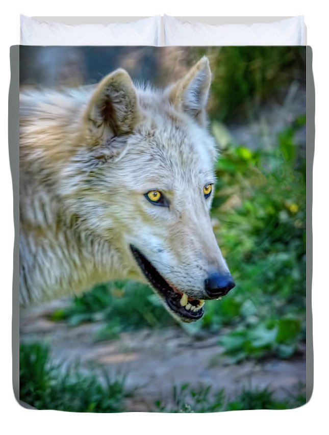 Wolf Duvet Cover featuring the photograph Gray Wolf by LeeAnn McLaneGoetz McLaneGoetzStudioLLCcom