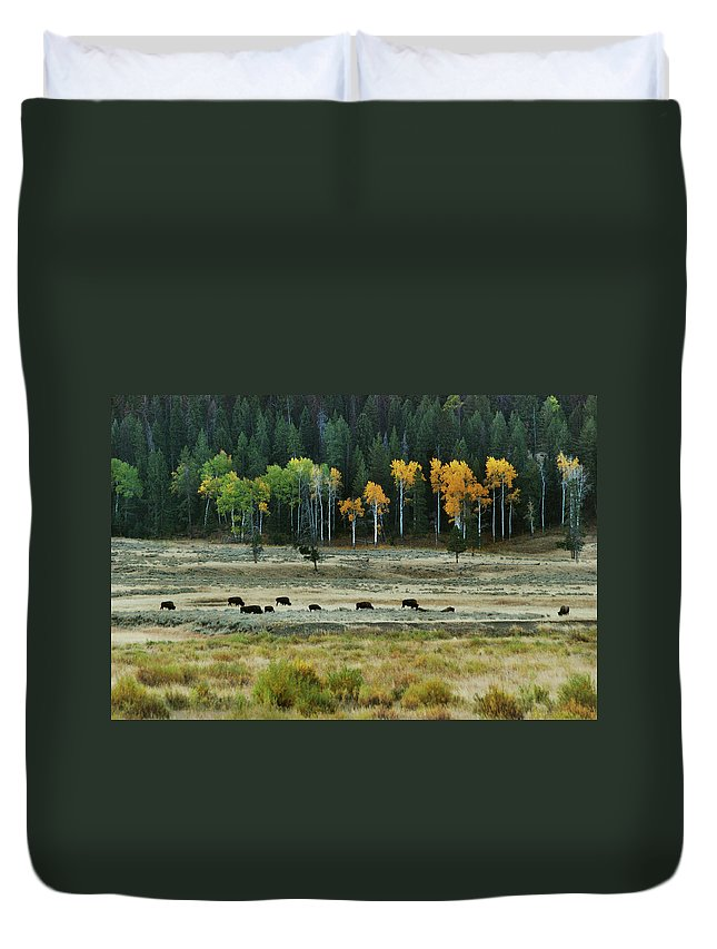 Bison Duvet Cover featuring the photograph Grazing Bison by Michael Peychich