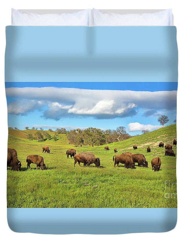 Buffalo Duvet Cover featuring the photograph Grazing Buffalo by Mimi Ditchie