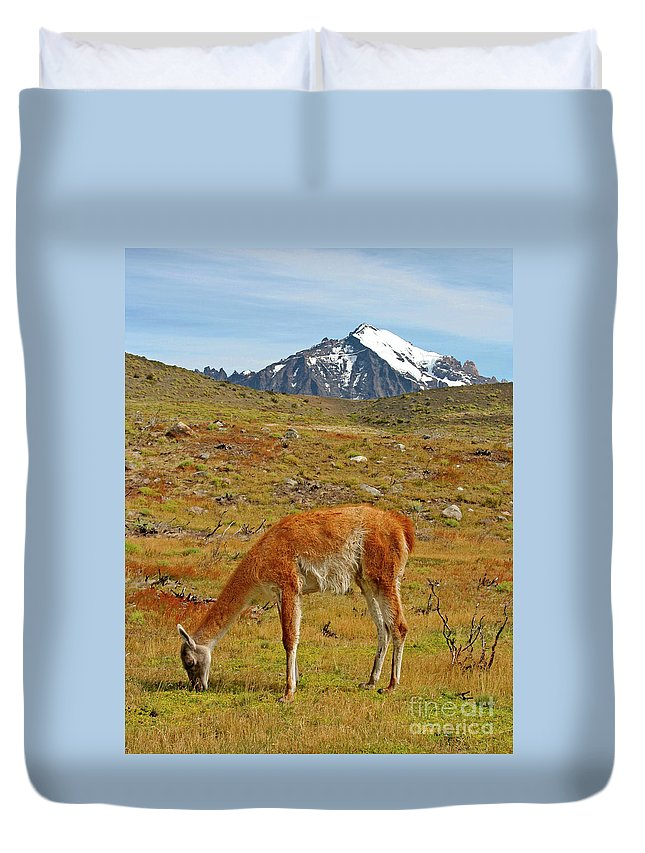 Guanaco Duvet Cover featuring the photograph Grazing Guanaco In Patagonia by Bruce Block