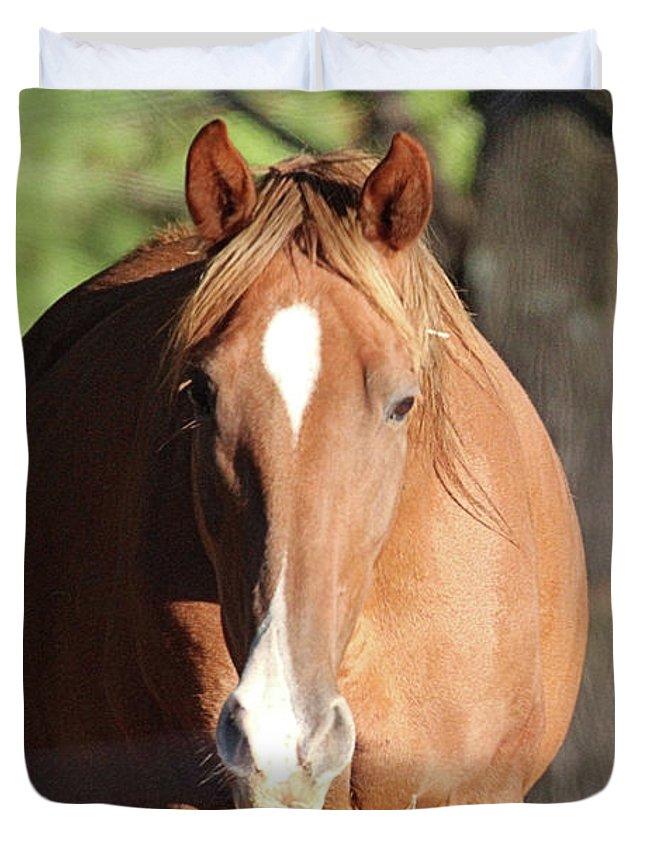 Horses Duvet Cover featuring the photograph Grazing Mare by Scott D Van Osdol