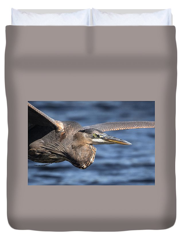 Greenfield Lake Duvet Cover featuring the photograph Great Blue Heron Close-up by Kevin Giannini