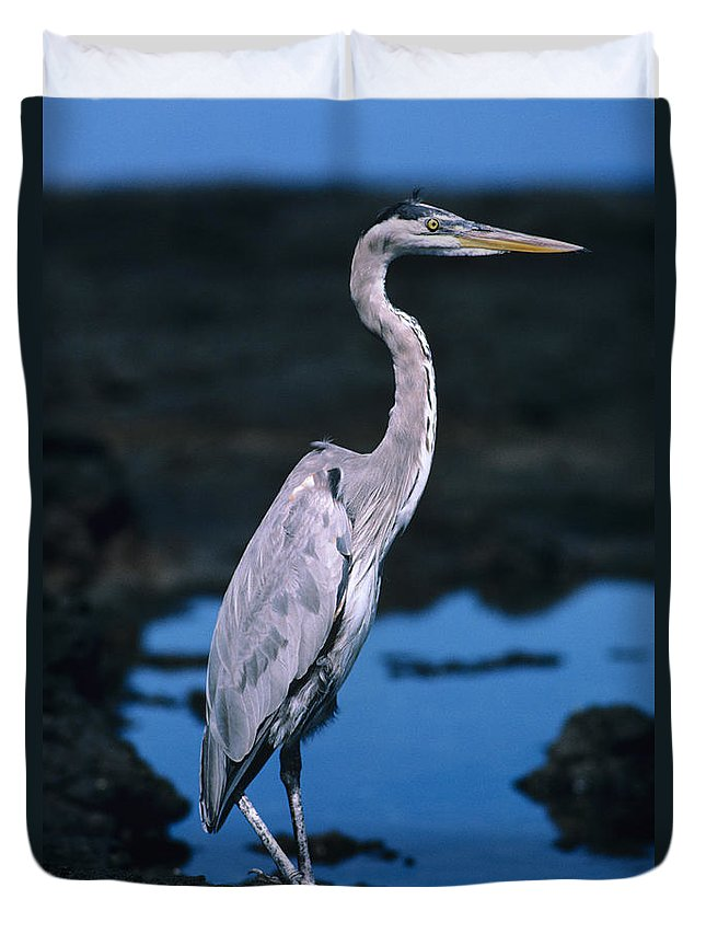 Animal Art Duvet Cover featuring the photograph Great Blue Heron by Ed Robinson - Printscapes
