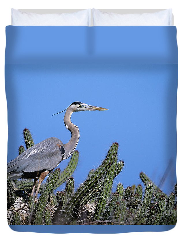Animal Art Duvet Cover featuring the photograph Great Blue Heron by John Hyde - Printscapes