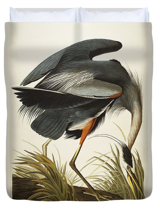 Great Blue Heron Duvet Cover featuring the drawing Great Blue Heron by John James Audubon