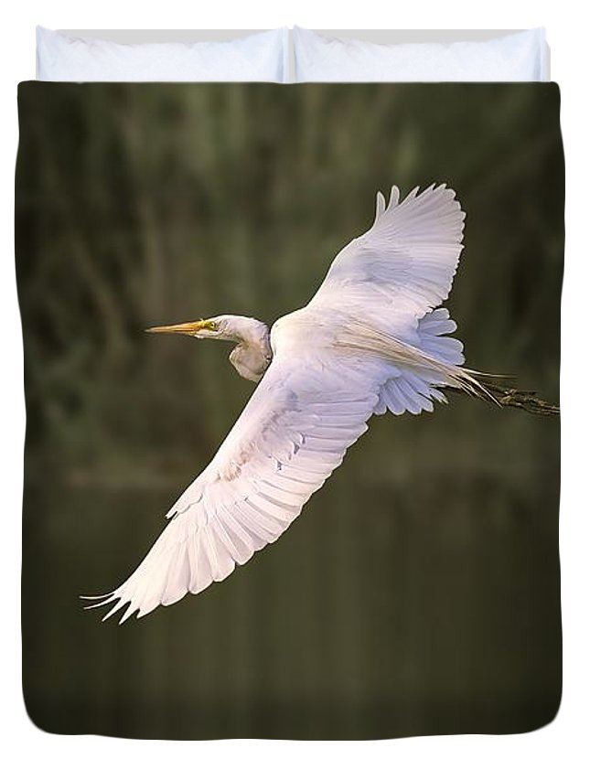 Bird Duvet Cover featuring the photograph Great Egret by Quenel Jiang